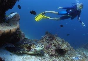 Scuba diving with turtles